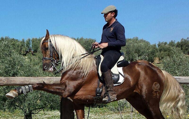 Visita a la Escuela de Equitación de Alfonso Porras