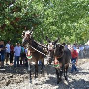 Gran espectación en la Feria del Ganado de Ntra Sra del Valle