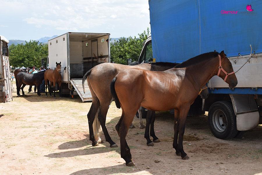 caballos 1