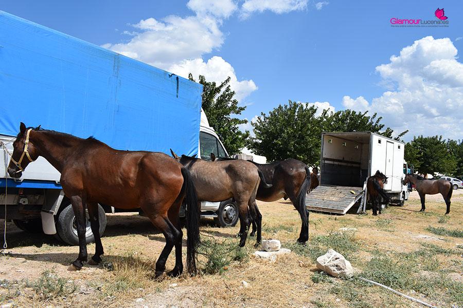caballos 2