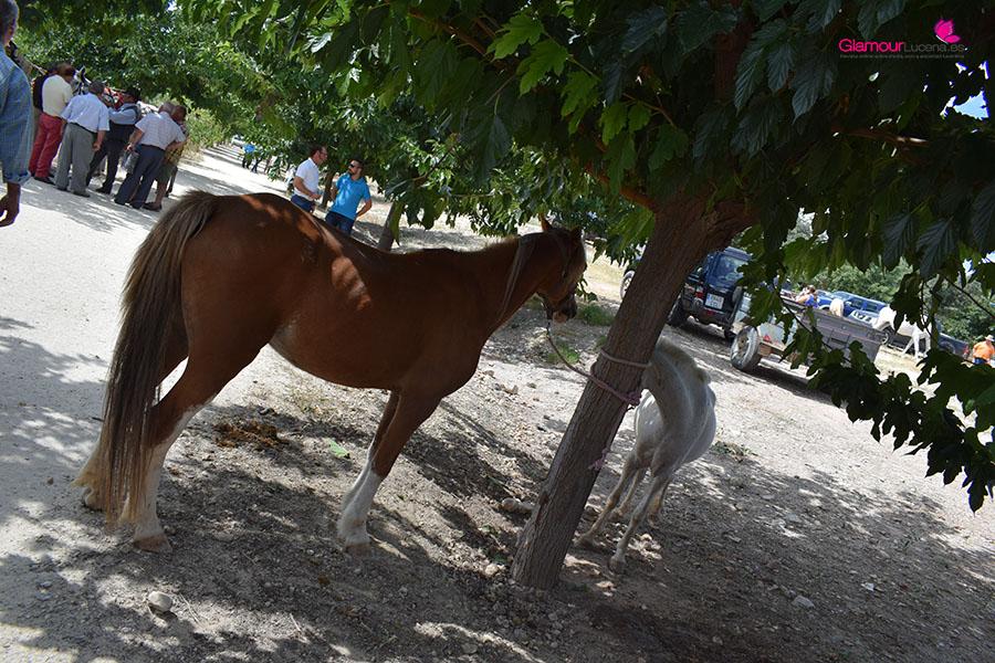 caballos 5