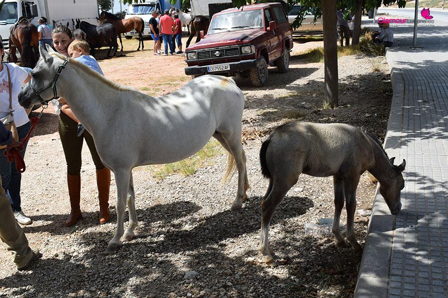 caballos 9