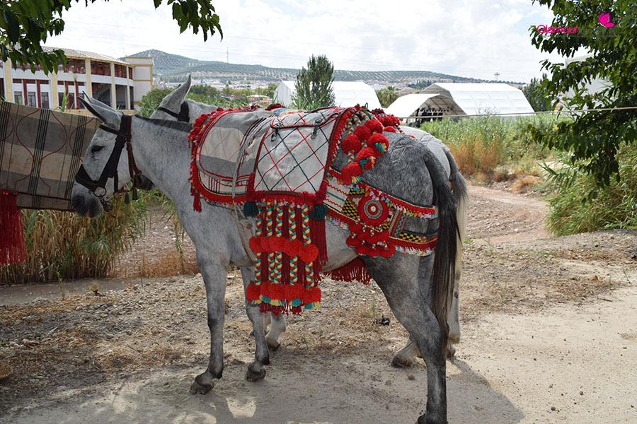 caballos portada