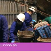 La Cueva del Ángel de Lucena participa con muestras de ADN humano en un estudio genético de los últimos 8.000 años