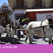 La Hermandad del Rocio de Lucena inicia su camino tras despedirse de la Virgen de Araceli