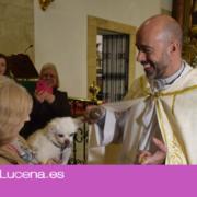 Las mascotas lucentinas acuden a la Parroquia de Santiago para recibir la bendición de su patrón San Antón