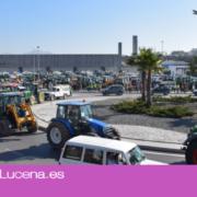Miles de Agricultores acuden a Lucena a la gran tractorada en protesta por los precios del aceite